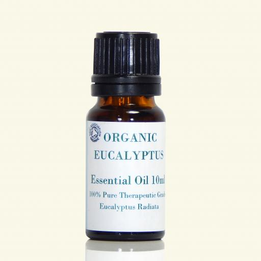 Eucalyptus Essential Oil (organic) - Eucalyptus Radiata
